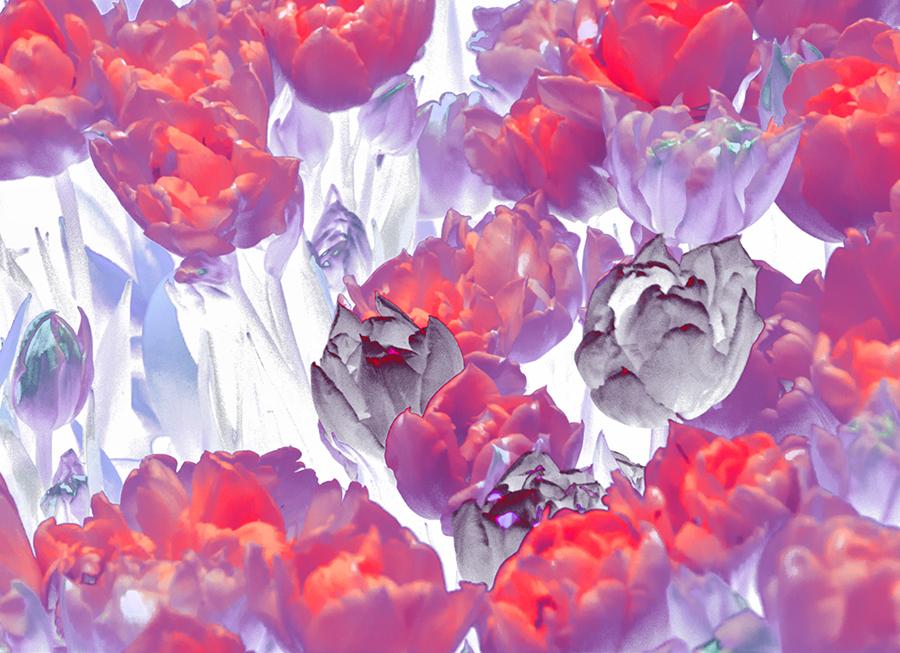 Flowers – noch mehr tulpen