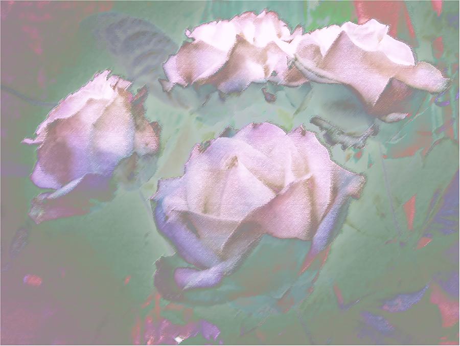 Flowers – rosa's