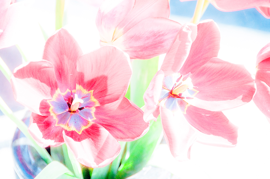 Flowers – tULPEN