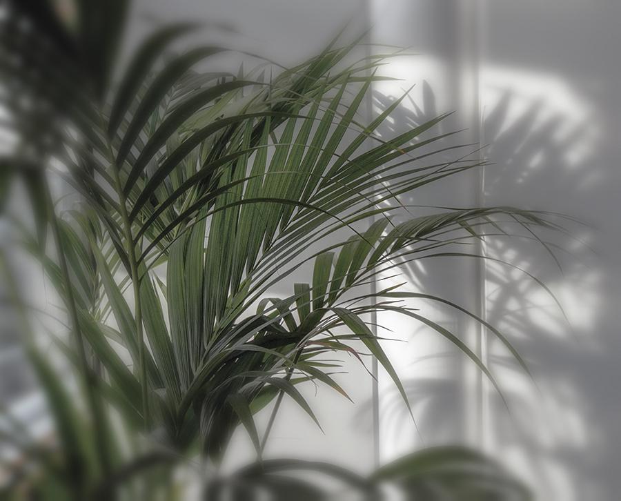 Büropflanze – Deutsche Bundesbabk SB